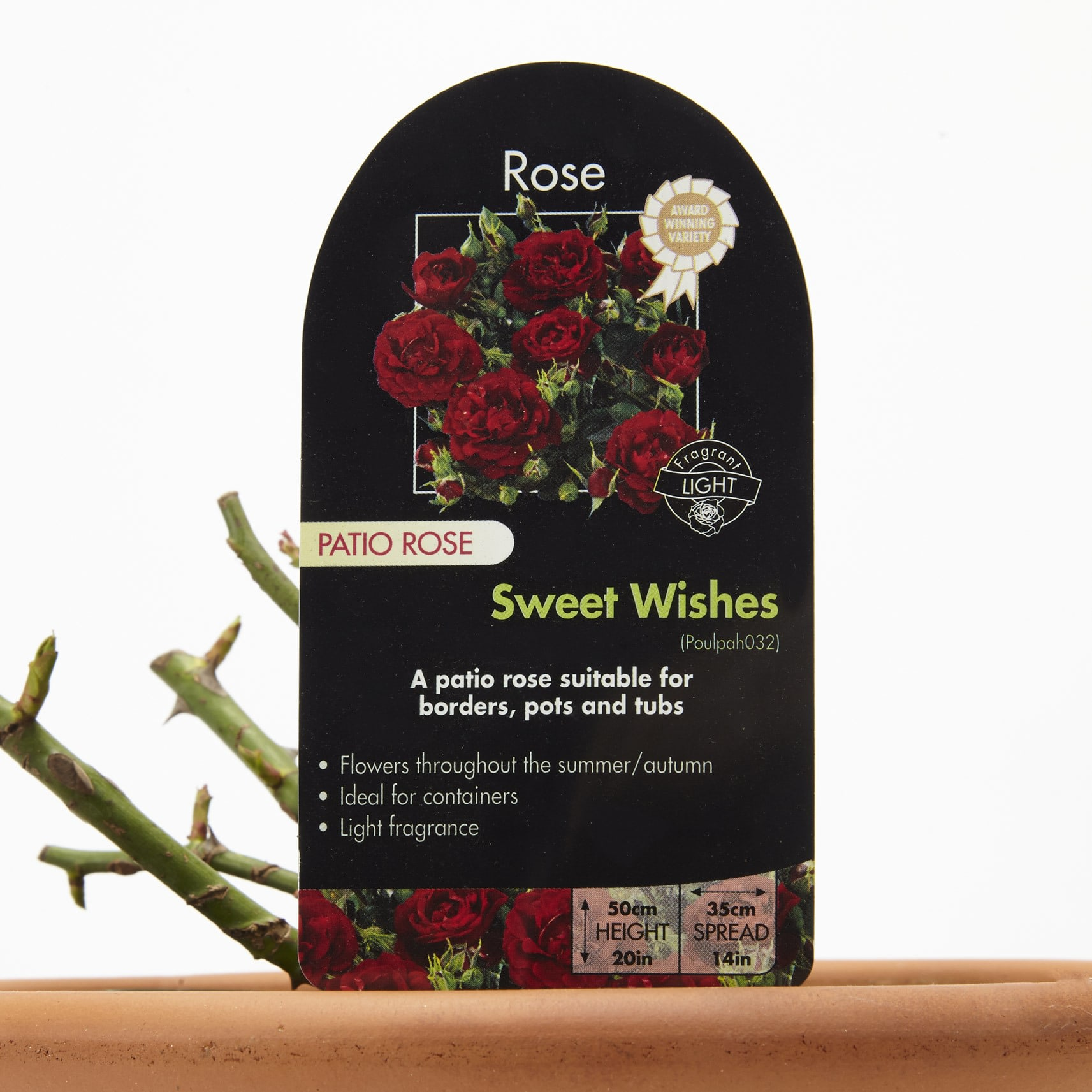 'Sweet Wishes' Rose