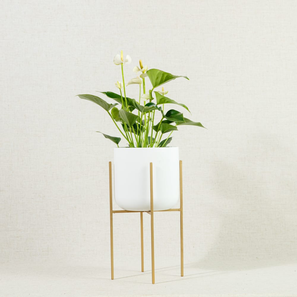 Luso Gold Plant Stand