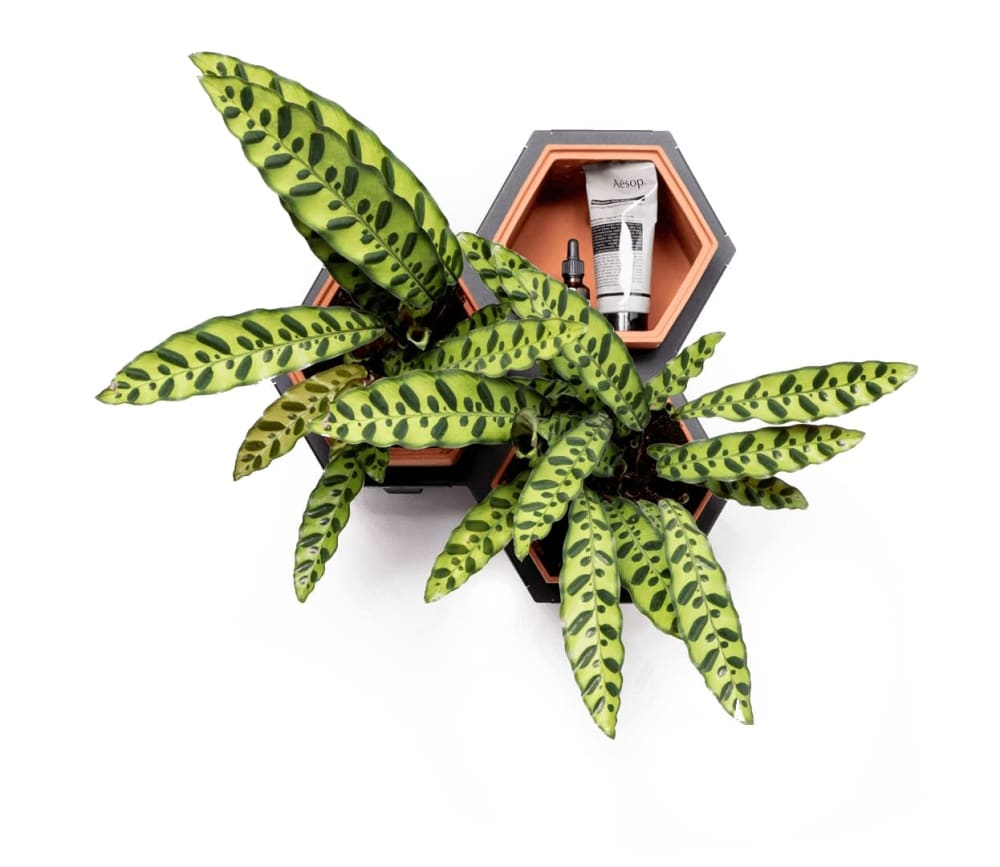 Horticus Small Living Wall Kit