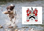 Dog Behaviour Diploma Online Course