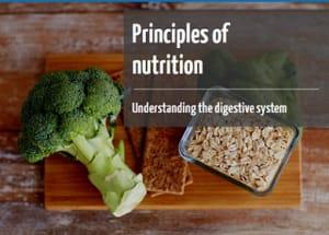 Understanding the digestive system online