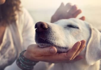 Canine Communication Diploma Online Course