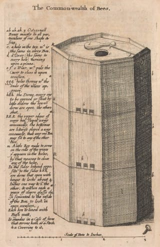 Christopher Wren's drawing of a 'transparent hive' from Samuel Hartlib, <em>The Reformed Common-Wealth of Bees</em>