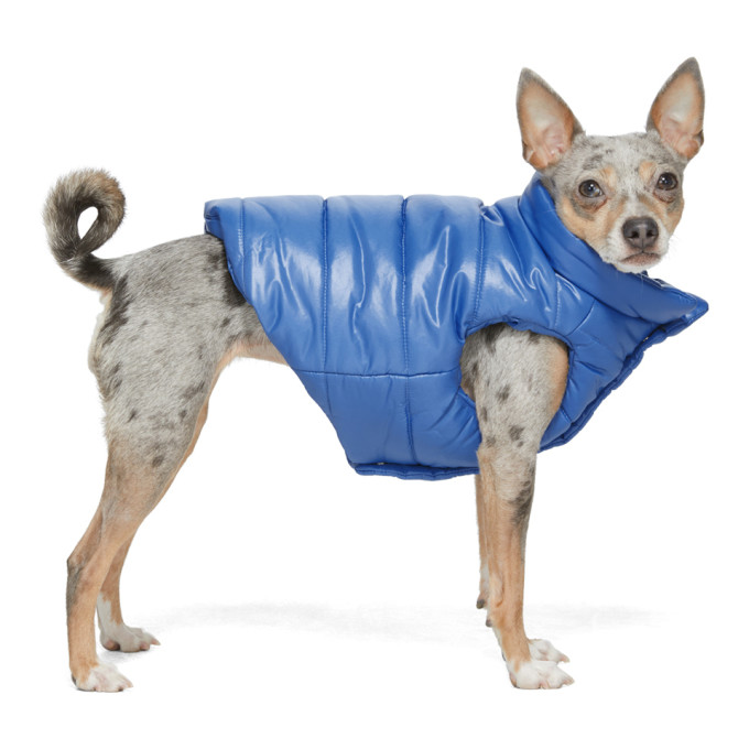 Moncler Genius Blue Poldo Dog Couture Edition Insulated Jacket In 707 Blue