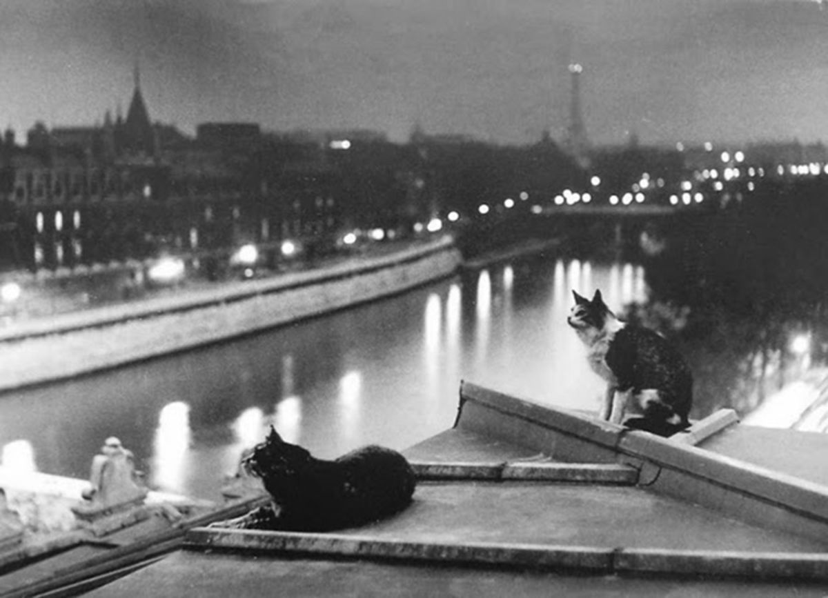 black and white photo of two cats on a rooftop in paris