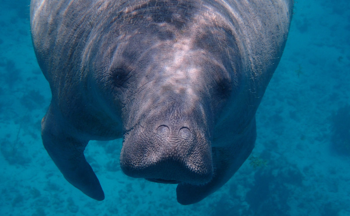 Belize Manatees, Book Dress, Baklava Butler, Evil Books & More: Endnotes 09 October