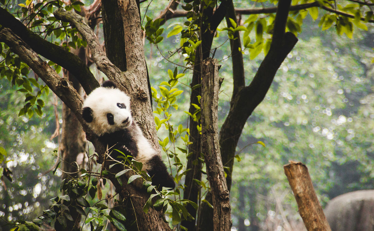 Giant Pandas, Why Read Fiction, Earl Grey, Magical Treehouses & More: Endnotes 13 March