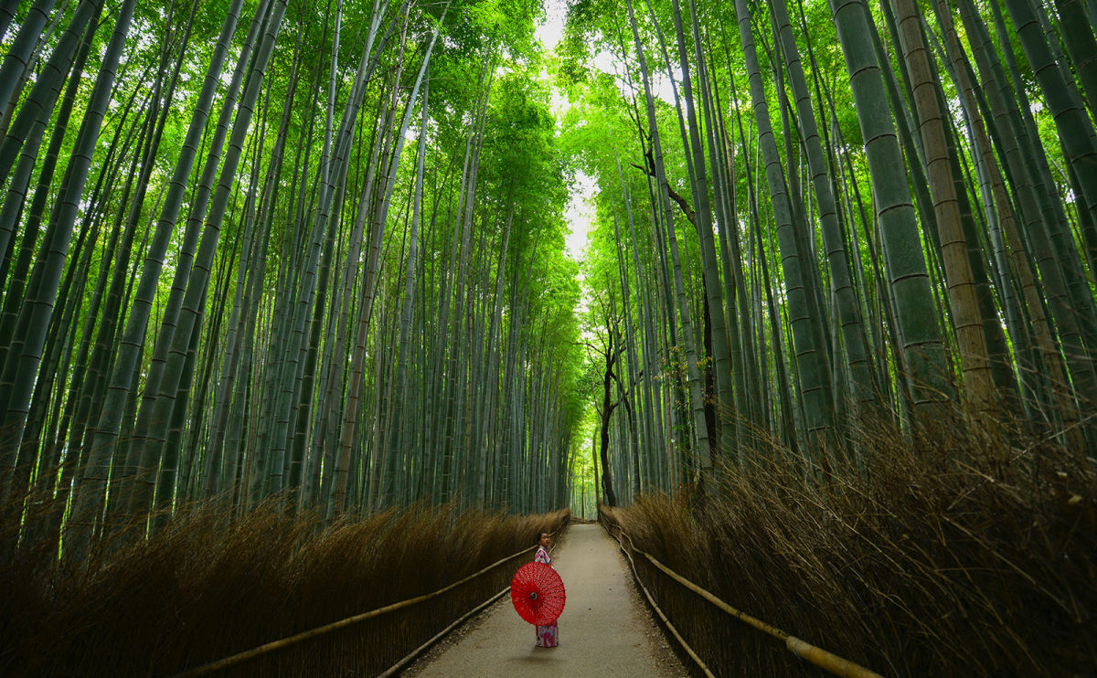 Postcards from Japan: Bamboo, Temples, Monkeys, and More