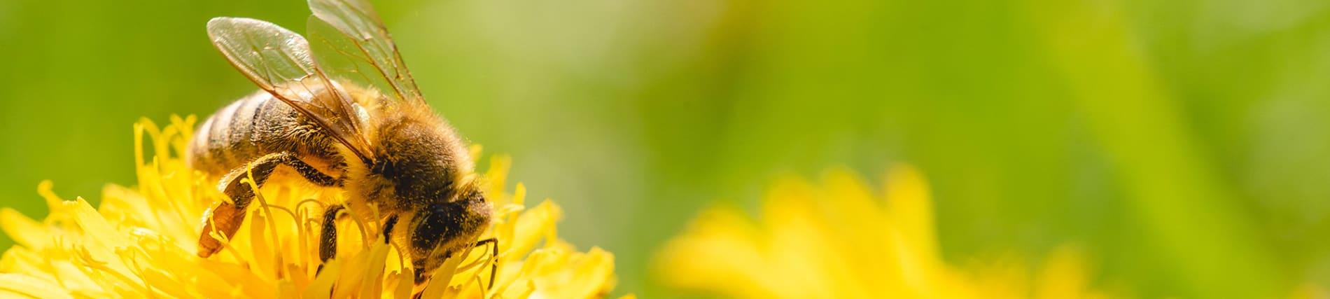 Stadtwerke Sindelfingen - Nachhaltigkeitsprojekt Bienenweiden