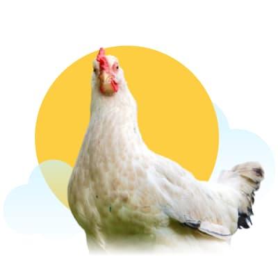 Fiona Cameron (Raising Backyard Chickens)