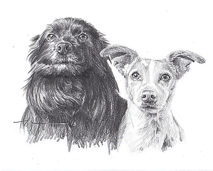black and light dog family pencil portrait by portrait artist mike theuer.