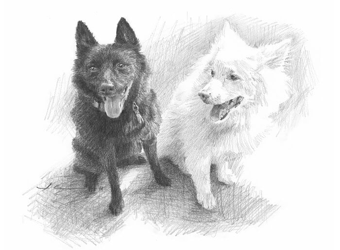 Pencil pet portrait from a photo of a black dog and a white dog by portrait artist Mike Theuer.