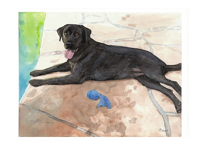 Watercolor pet portrait from a photo of a black labrador by the pool by portrait artist Mike Theuer.