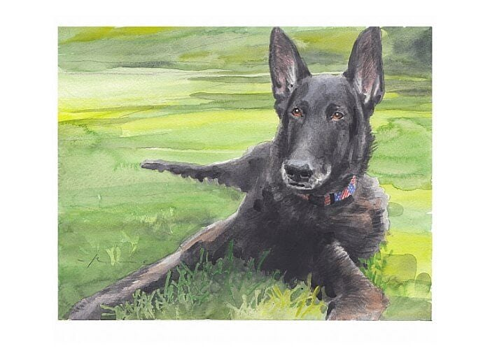 Watercolor pet portrait from a photo of a black shepherd on the lawn by portrait artist Mike Theuer.