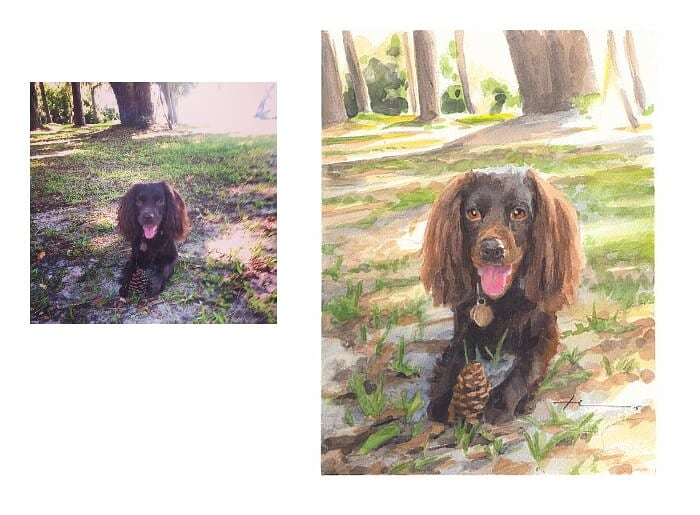 Watercolor pet portrait from a photo of a boykin spaniel with a pinecone by portrait artist Mike Theuer. Photo reference included.