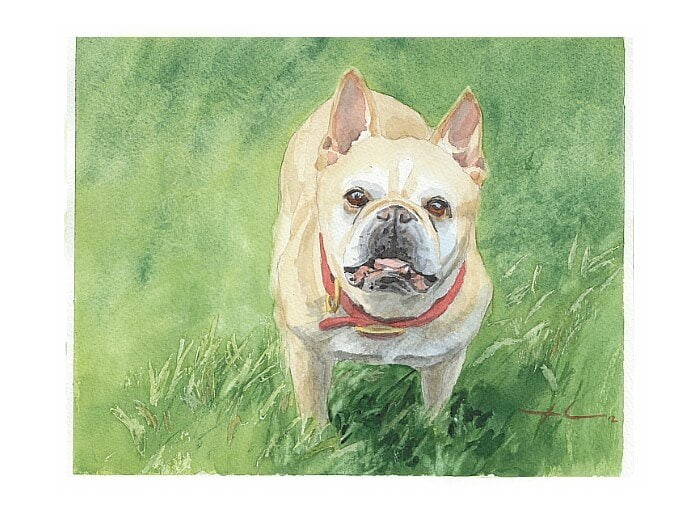 Watercolor pet portrait from a photo of a french bulldog by portrait artist Mike Theuer.