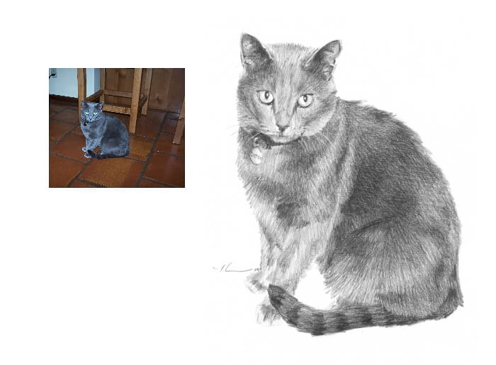 Pencil pet portrait from a photo of a gray cat by portrait artist Mike Theuer. Photo reference included.