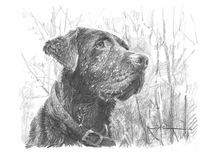 Pencil pet portrait from a photo of a chocolate labrador in the woods by portrait artist Mike Theuer.