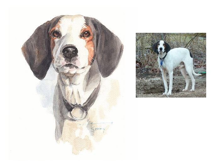 Watercolor pet portrait from a photo of a treeing walker coon hound by portrait artist Mike Theuer. Photo reference included.