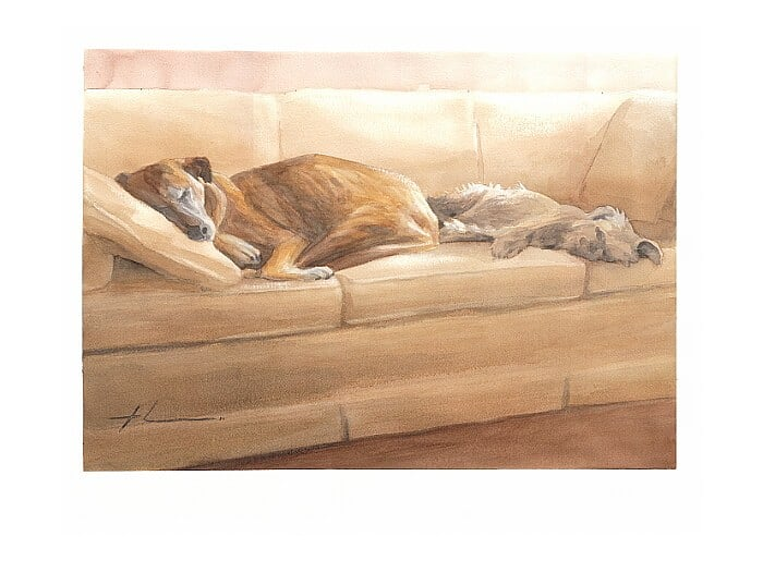 Watercolor pet portrait from a photo of dogs asleep on a couch by portrait artist Mike Theuer.