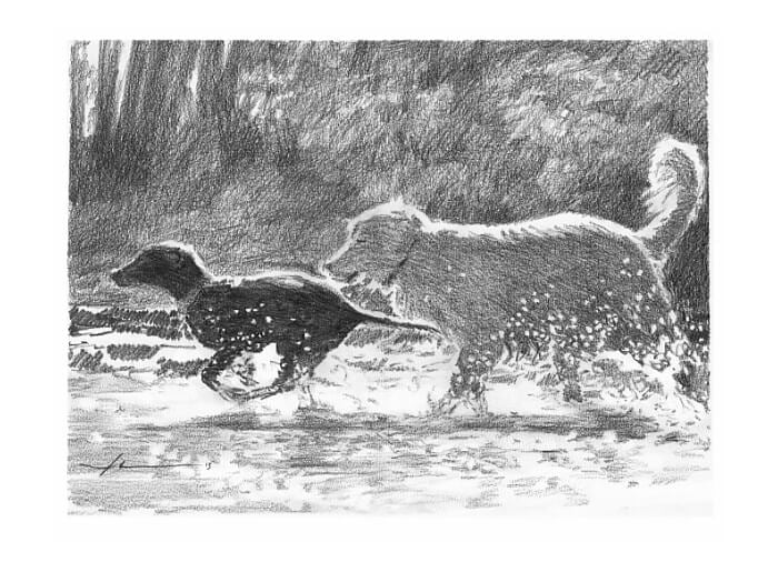 Pencil pet portrait from a photo of dogs running through a stream by portrait artist Mike Theuer.