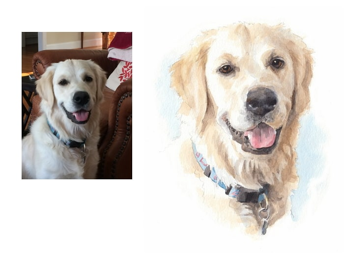 Watercolor pet portrait from a photo of a golden retriever bust by portrait artist Mike Theuer. Photo reference included.