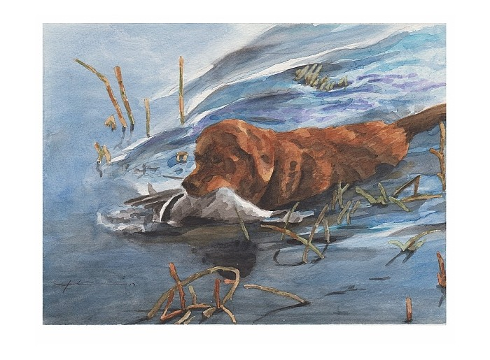 Watercolor pet portrait from a photo of a retriever retreiving a duck by portrait artist Mike Theuer. Photo reference included.