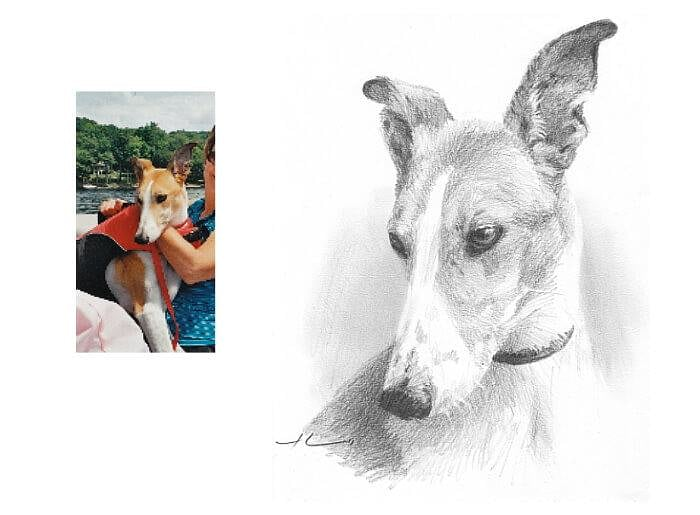 Pencil pet portrait from a photo of a greyhound by portrait artist Mike Theuer. Photo reference included.