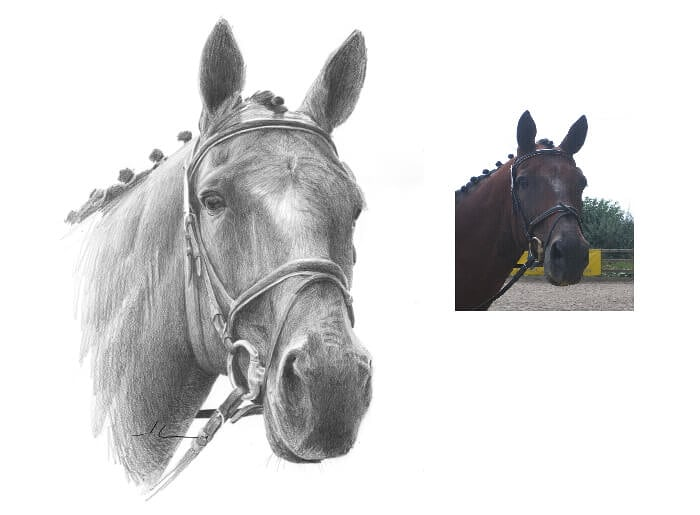 Pencil pet portrait from a photo of a horse by portrait artist Mike Theuer. Photo reference included.