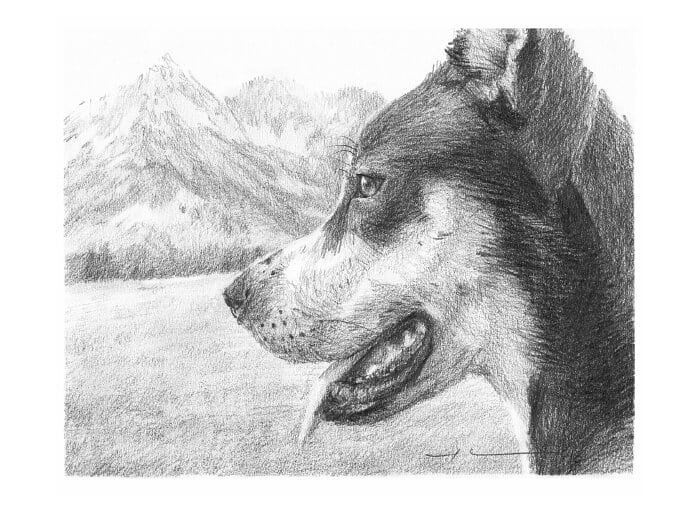 Pencil pet portrait from a photo of a malamute closeup by portrait artist Mike Theuer.