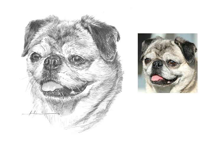 Pencil pet portrait from a photo of a pug close-up by portrait artist Mike Theuer.