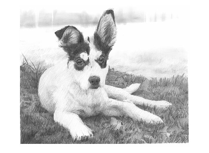 Pencil pet portrait from a photo of a puppy on the lawn by portrait artist Mike Theuer.