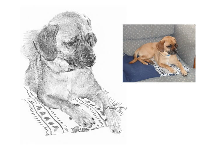 Pencil pet portrait from a photo of a puppy on a blanket by portrait artist Mike Theuer. Photo reference included.