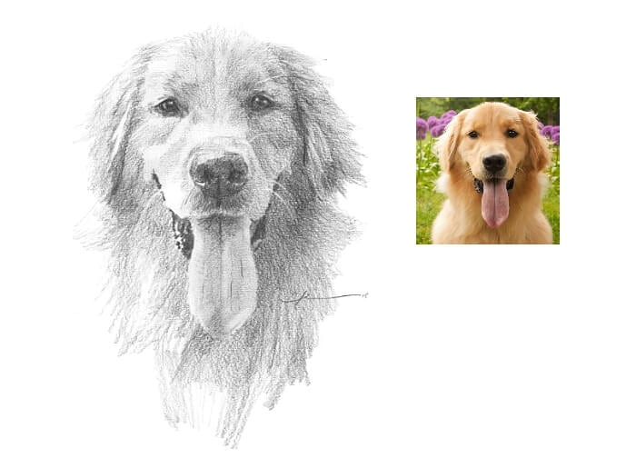 Pencil pet portrait from a photo of a smiling retriever by portrait artist Mike Theuer. Photo reference included.
