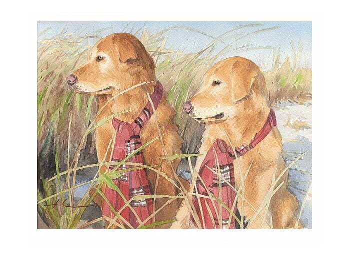 Watercolor pet portrait from a photo of two retrievers in beach grass by portrait artist Mike Theuer.