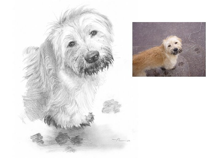 Pencil pet portrait from a photo of messy sheepdog by portrait artist Mike Theuer. Photo reference included.