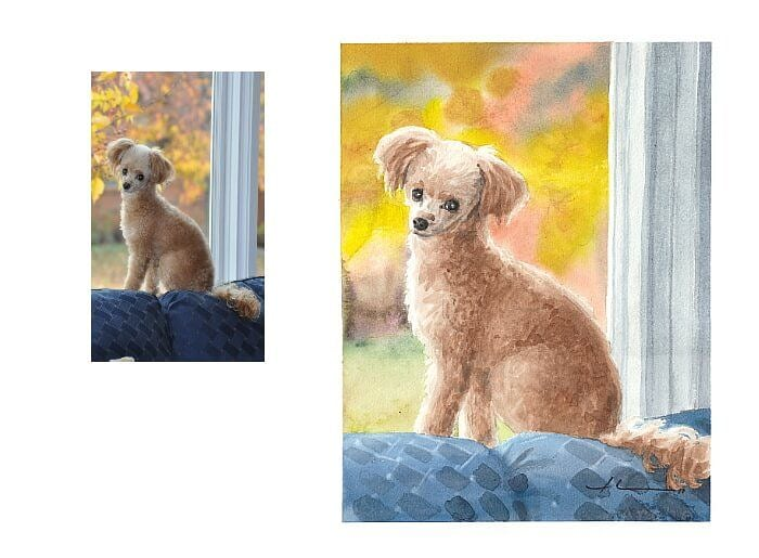 Watercolor pet portrait from a photo of a toy poodle by portrait artist Mike Theuer. Photo reference included.