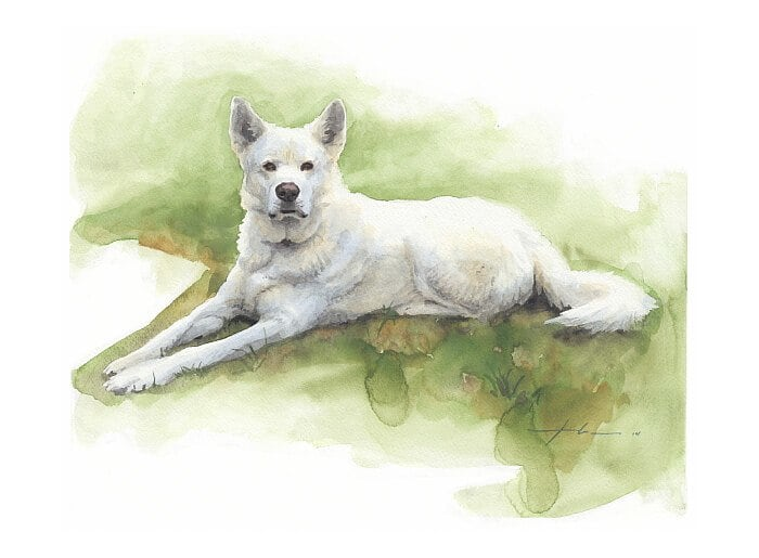 Watercolor pet portrait from a photo of a white sled dog lounging in the grass by portrait artist Mike Theuer.