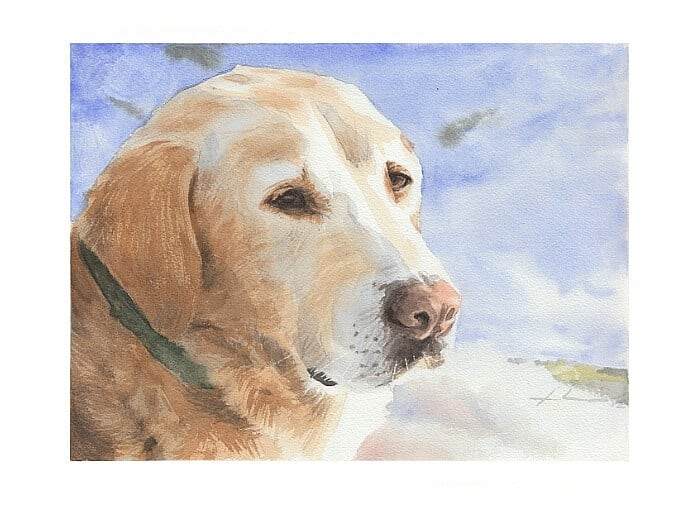 Watercolor pet portrait from a photo of a yellow labrador in winter by portrait artist Mike Theuer.