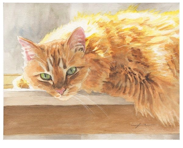 orange maine coon cat watercolor portrait from a photo by portrait artist Mike Theuer
