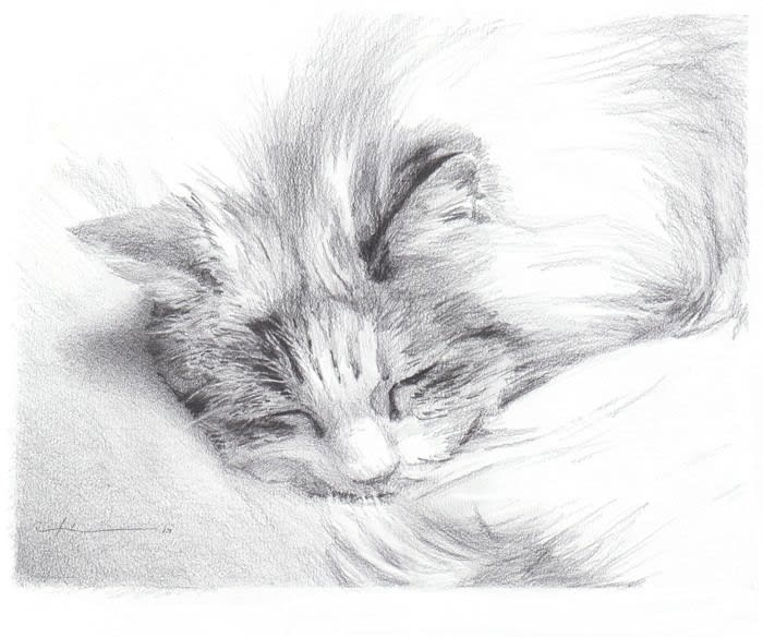 sleeping_long_hair_cat_pencil_porrait_mike_theuer