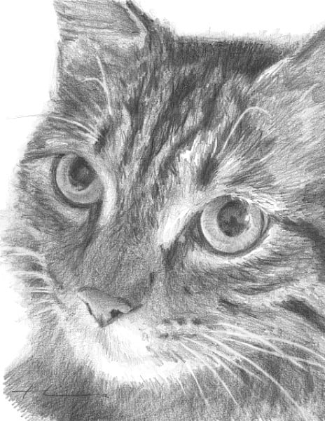 kitty closeup drawing by portrait artist mike theuer