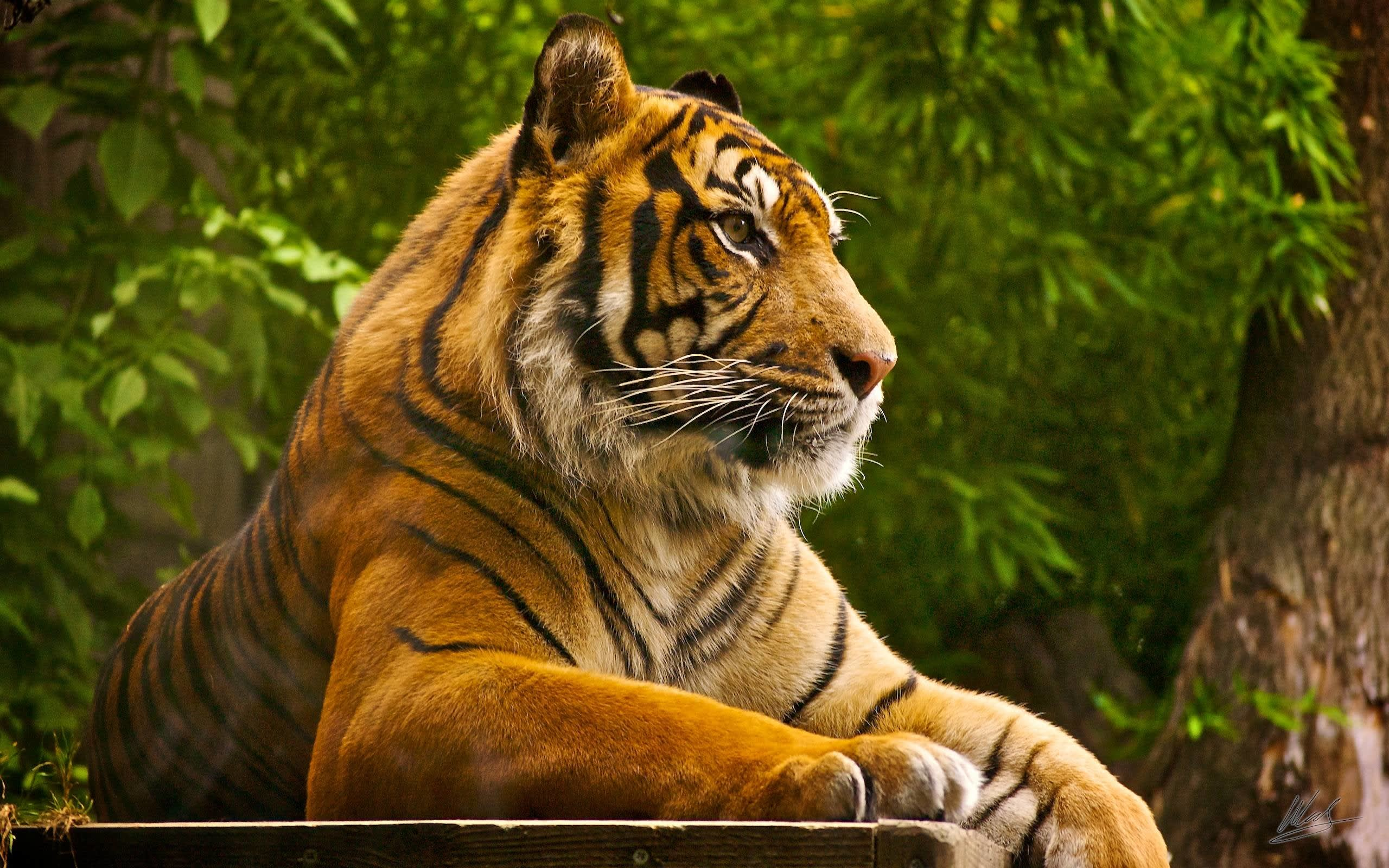 Hire a car and driver in Ranthambore National Park