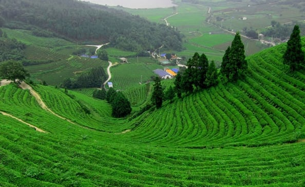 Hire a car and driver in Coonoor