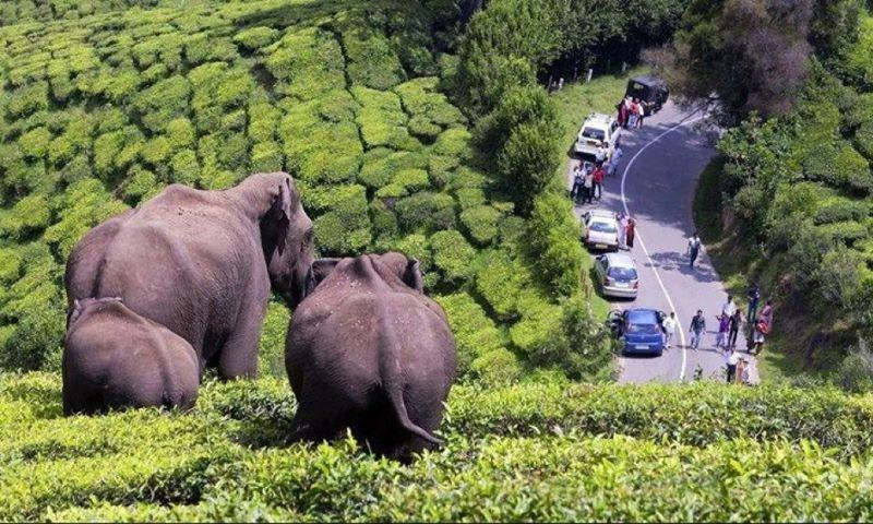 Hire a car and driver in Periyar