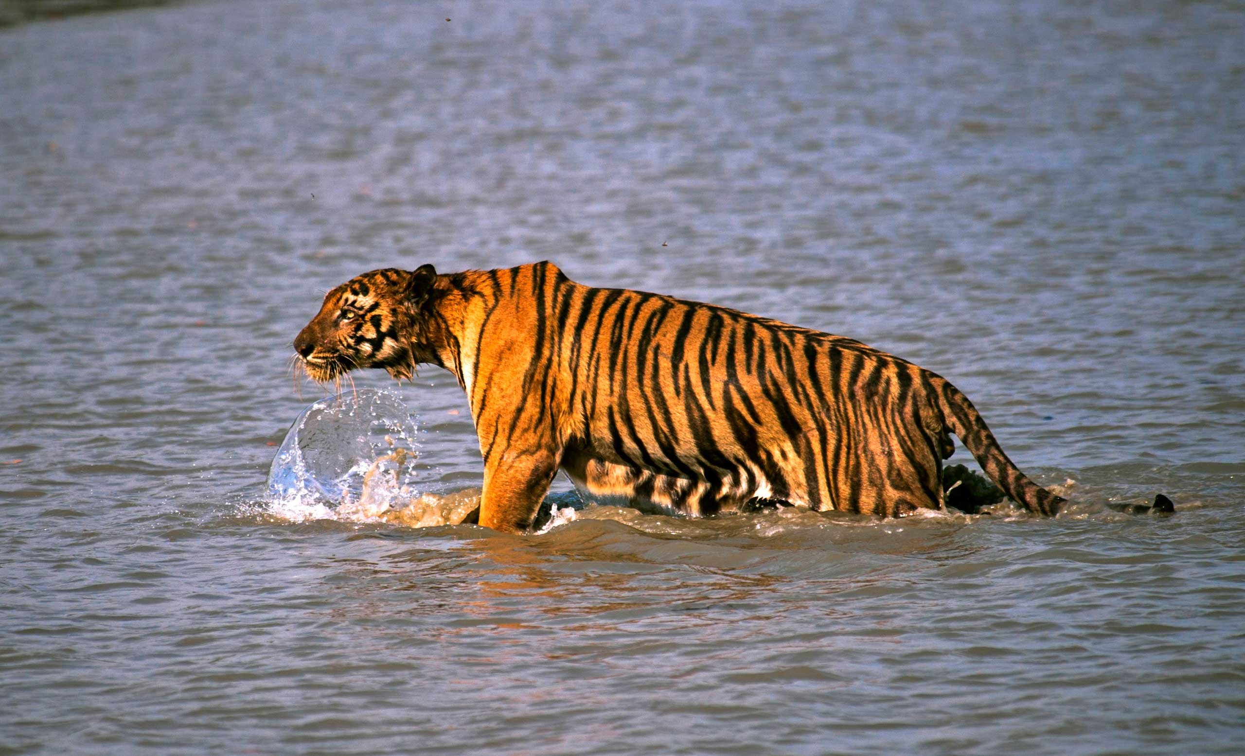 Hire a car and driver in Sunderban
