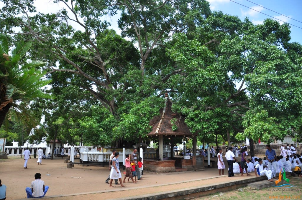 Hire a car and driver in Vavuniya