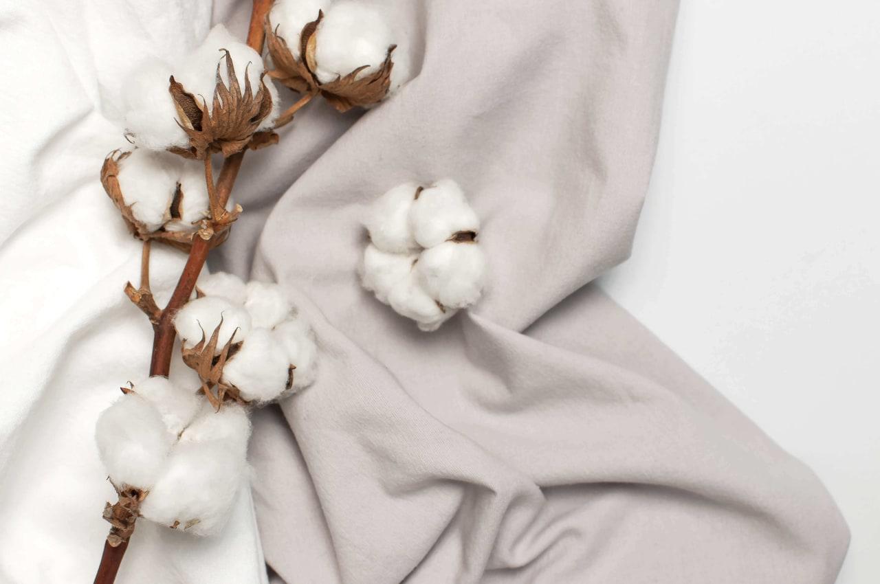 bawełna na bawełnianym swetrze
