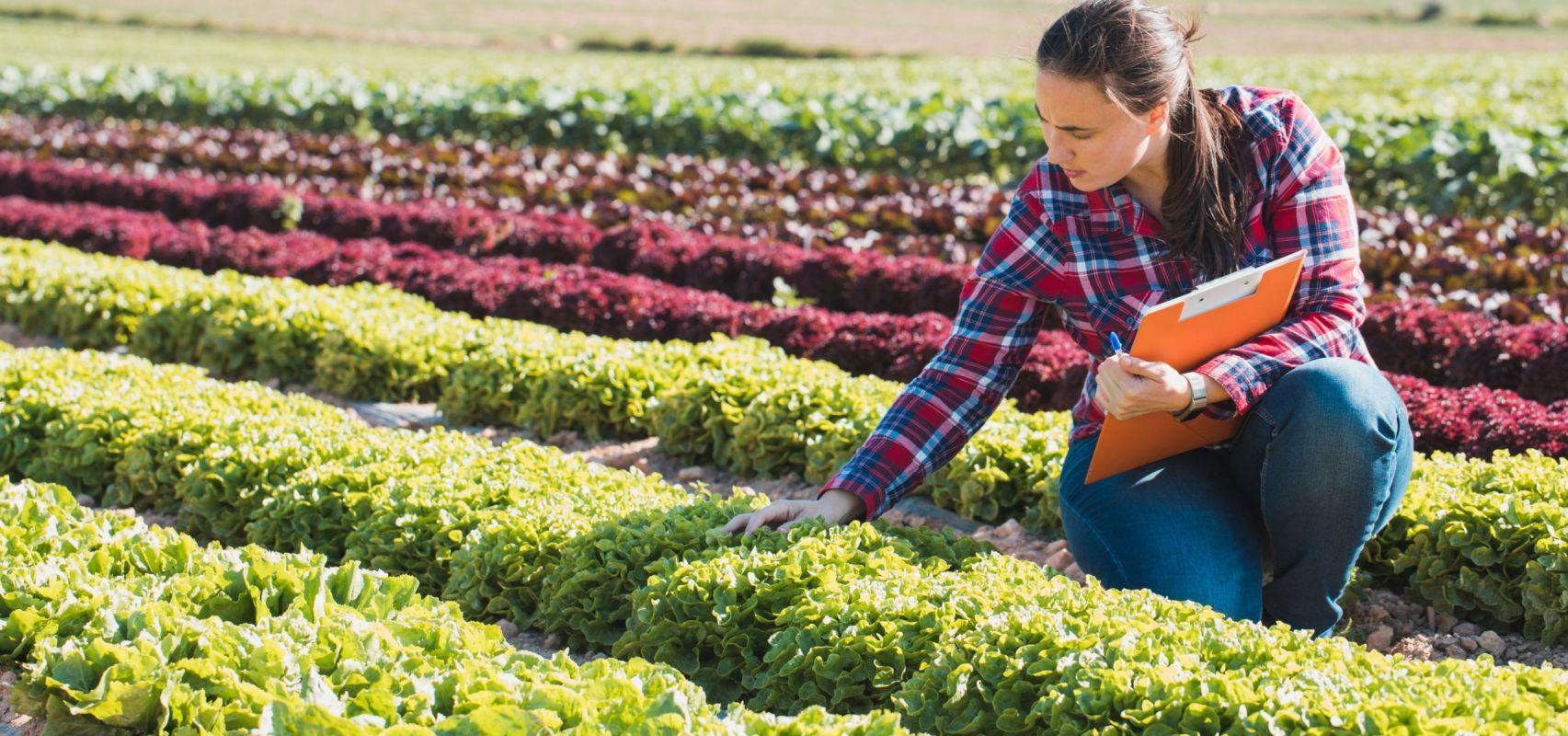 Female Farmer - USA CSR LR (iStock-948055100)