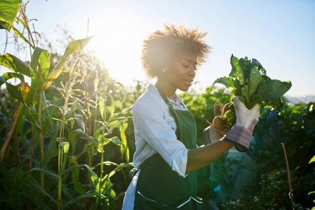 Female Vegetable Gardener – USA CSR LR (iStock-934919474)